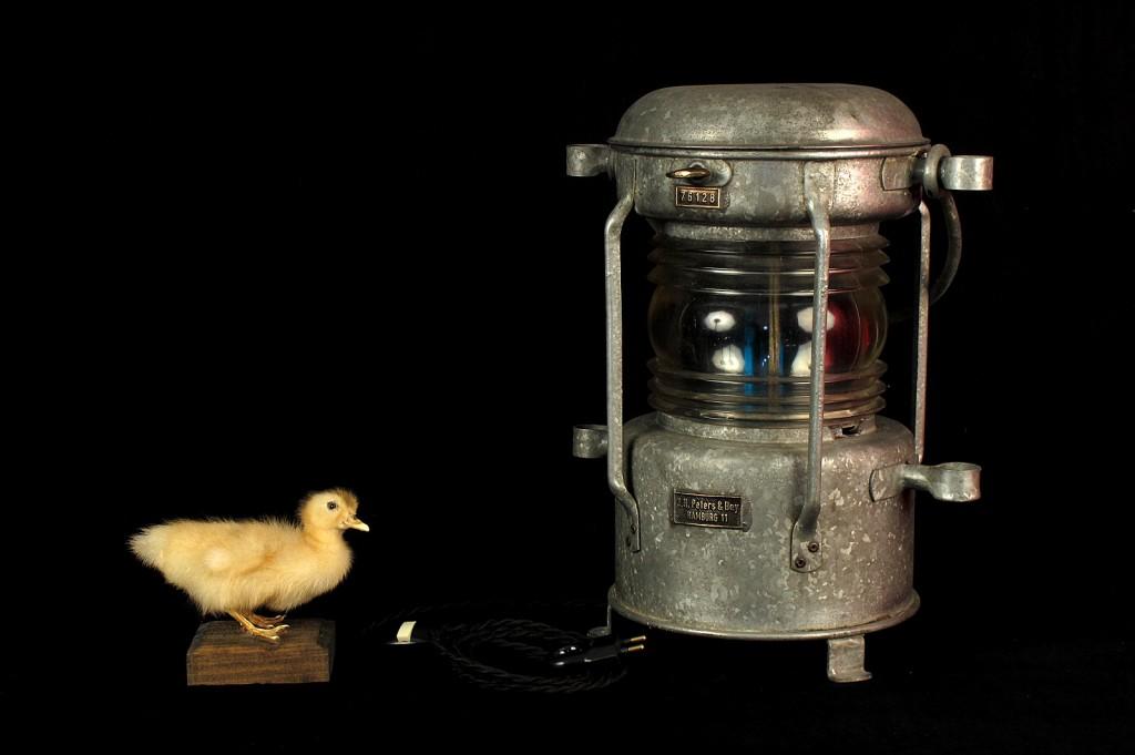 FANAL BATEAU ANCIEN ELECTRIFIEE LAMPE ORIGINAL LUMINAIRE ANCIEN OLD SCHOOL BAZAAR 7